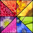 Rainbow collage of flowers in square frame — Stock Photo #62774513