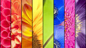 Collage of flowers in rainbow colors — Fotografia Stock