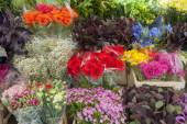 Cut flowers of a market stall — Stock Photo
