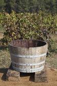 Traditional vat for the grape harvest — Stock Photo
