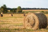 Fardos de palha na fazenda — Fotografia Stock