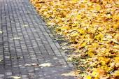 Paving with autumn yellow leaves — Stockfoto