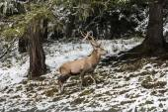 Winter landscape in Brunico — Foto Stock