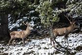 Winter landscape in Brunico — Stock Photo
