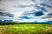 Soothing view of the green meadow and cloudy sky — 图库照片