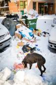 METKOVIC, CROATIA - FEBRUARY 5: Dog looking for food on the snow covered streets in Metkovic, Croatia on February 5, 2012. — Stock Photo