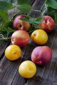 Juicy fresh plums  and nectarines on dark wooden background — Stock Photo