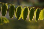 Feuilles d'automne coloré — Photo
