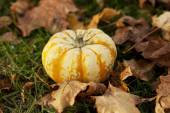 Autumn pumpkin in colorful leaves — Stock Photo
