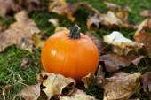 Autumn pumpkin in colorful leaves — Stock fotografie