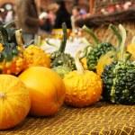 Autumnal pumpkins, harvest — Stock Photo #61241793