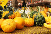 Autumnal pumpkins, harvest — Stock Photo