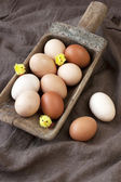 Chicken colorful eggs — 图库照片