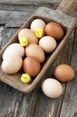 Chicken colorful eggs — Stock Photo