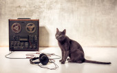 Hipster pet cat with magnetophone and headphones — Stock Photo