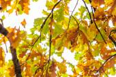 Tree branch with autumn leaves. Autumn background. — Stock Photo