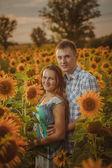 Beautiful couple having fun in sunflowers fields — 图库照片