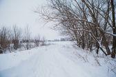 Winter landscape. Pine branch tree under snow — Stock Photo