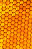 Honey beehive — Stock Photo