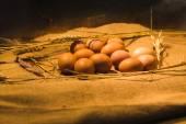 蛋在巢 — 图库照片