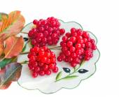 Clusters of berries of a guelder-rose and autumn leaves on a whi — Stock Photo