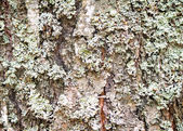 The trunk of an old tree foreground ( background image). — Stock Photo