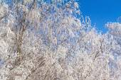 Winter landscape: trees in the frost. — Stockfoto