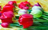 Bright red tulip against yellow silk — Stock Photo