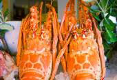 Lobster: marine crustaceans of the Mediterranean sea. — Stock Photo