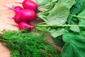Radishes and green dill on a cutting Board — Stock Photo