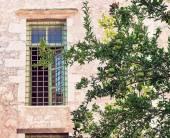 Granátové jablko stromu před průčelí staré budovy. — Stock fotografie