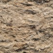 Dried seaweed background — Stock Photo #52249301