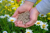Hands with fertilizer — Stock Photo