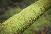 Moss tube — Stock Photo