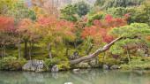 Japanese fall garden — Stock Photo