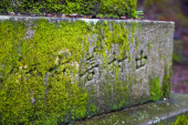 Moss in a Shinto temple — Stock Photo