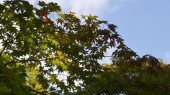 Green leaves on a sunny day — Stock Photo