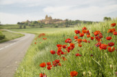 Red poppy flowers on a countryside road — Stock Photo