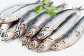 Fresh anchovies close up — Stock Photo