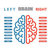 Left and right human brain vector illustration — Stock Vector