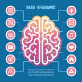 Brain infographic - vector concept illustration with icons — Stock Vector
