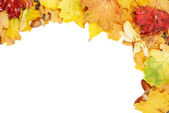 Background of multicolored leaves — Stock Photo