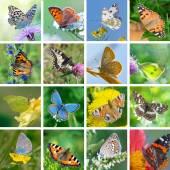 European butterflies — Stock Photo