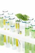 Sprout  in vitro — Stock Photo