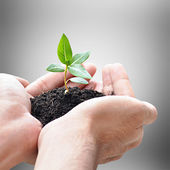 Hand holding green seedling with soil — Stock Photo