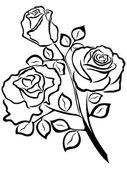 Black outline of rose flowers — Stock Vector