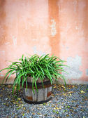 Green plant in wooden pot decorating house exterior — Stock Photo