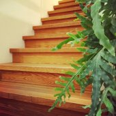 Wooden staircase and green plant — ストック写真