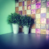 Green plants decorating a kitchen — Stock Photo