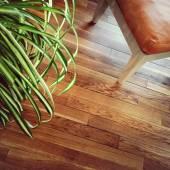 Silla y planta sobre suelo de madera — Foto de Stock